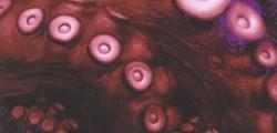 Kraken, indigestion littéraire