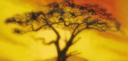 Acacia, le trône de fer en moins rouillé